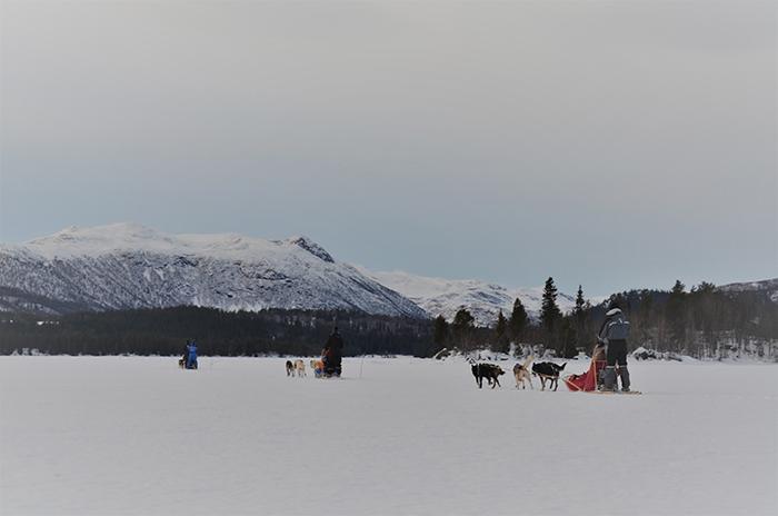 Hunde, Huskys am Schlitten im Schnee von der Seite auf einem See