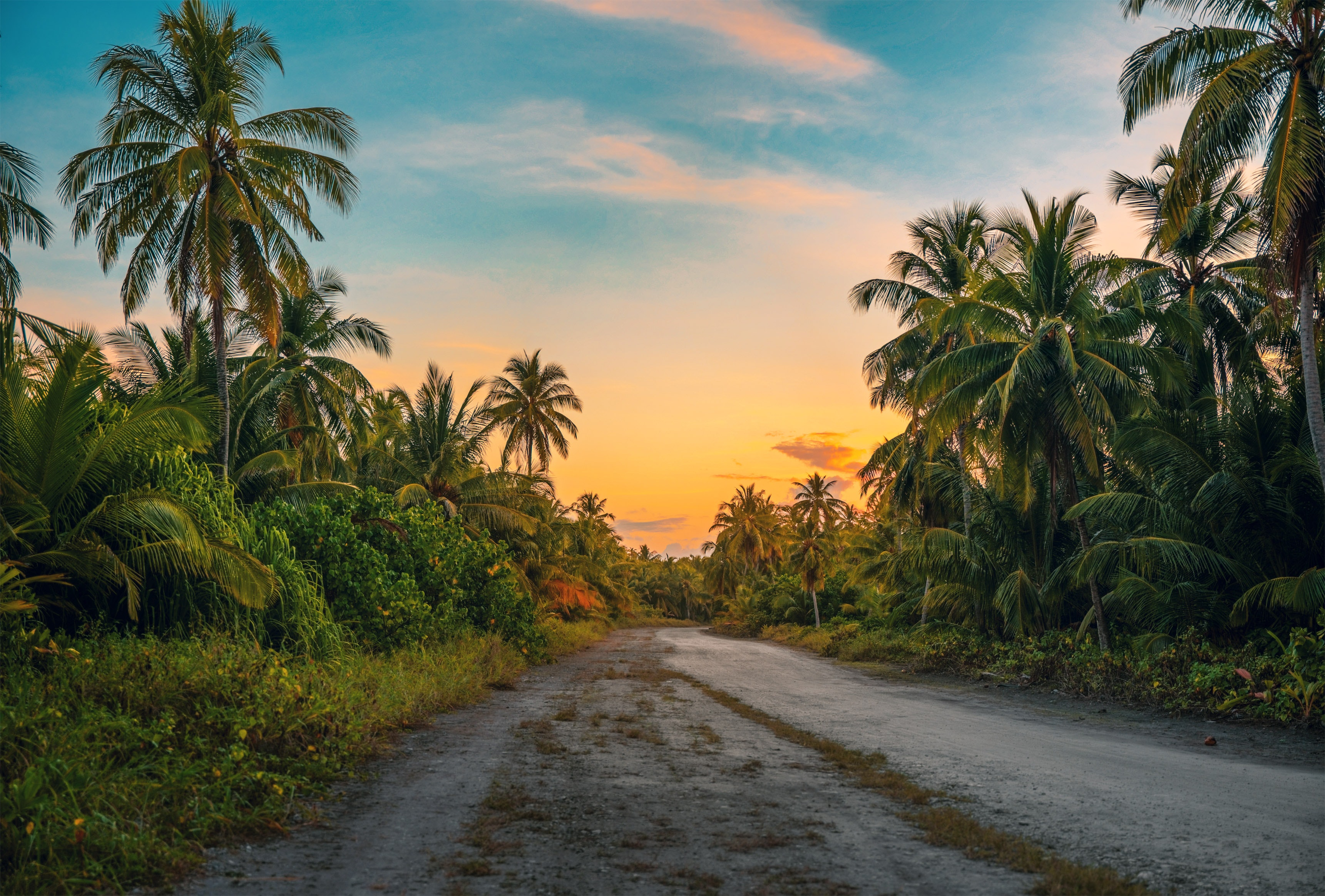coconut-trees-dawn-daylight-1033729