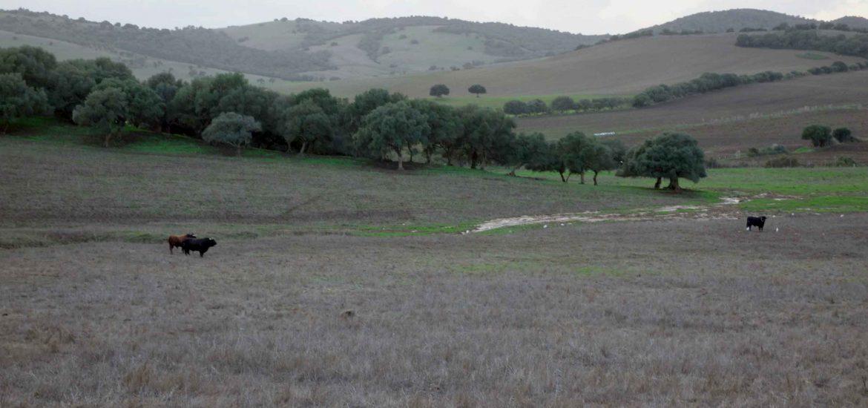 Kurztrip Andalusien - Stier auf Wiese