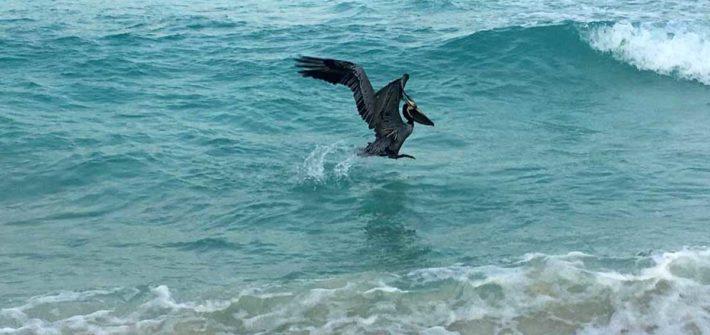 Cancun-Meer-Komoran